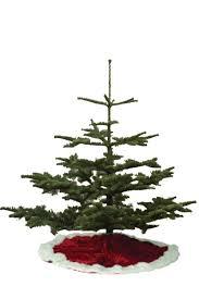 Worthington Tree FarmTypes Of Fir Christmas Trees