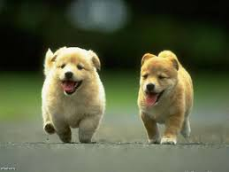 Cute Hd Wallpapers Of Puppies