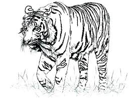 Collection Of Coloring Pages Of A Tiger Download Them And Try To