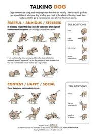 39 Best Infographics Images Dog Health Tips Animales Dog