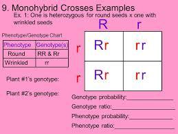 Fundamentals Of Genetics Ppt Download