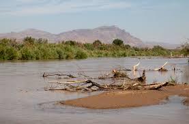 River refuge: Public-private partnership works to restore silvery minnow  habitat » Albuquerque Journal