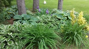 Small Picture Our Garden Design with Hosta and Ground Cover
