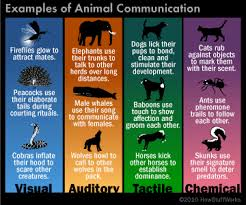 Wolf Body Language Chart How Do Animals Communicate Howstuffworks