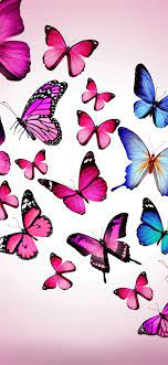 blue butterflies 1080x1920 iPhone ...