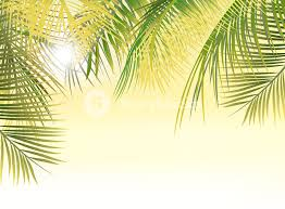 summer background vector summer background with palm leaves royalty free stock image