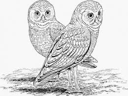 Small Picture Free Realistic Owl online coloring page for adults Animal