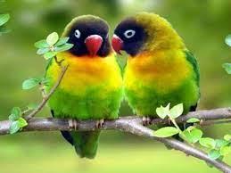 Love Wallpaper Of Birds
