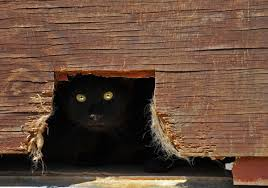 Image result for hiding