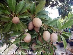 Dwarf Fruit Trees From Stark Brou0027s  Dwarf Fruit Trees For SaleFruit Trees For North Florida