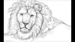 lioness face drawing. Contemporary Lioness How To Draw A Lion Face Inside Lioness Drawing F