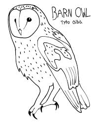 Small Picture Barn Owl Colouring Page by ProjectOWL on DeviantArt