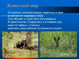 Презентация на тему Растительный и животный мир Ставрополья  6 Животный мир