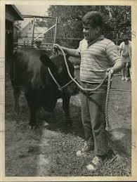press photo roy sherman with his black angus cow at ham fair in new york