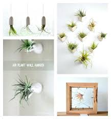 wall plant hanger hanging air plant containers wall hanger hive planter brick wall plant hangers