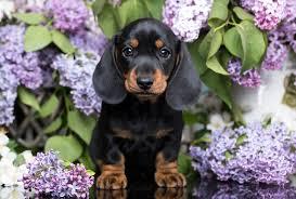 <b>Cutest Dog</b> Breeds as Puppies   Reader's Digest