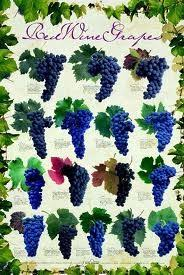 Grapes Chart World Grapes Chart