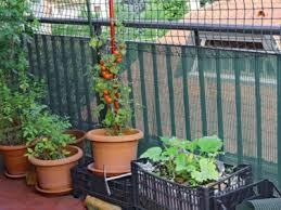 balcony vegetable garden growing a