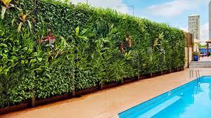 vertical garden india dels about vertical gardening