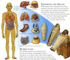 Canopic Jar Designs Canopic Jars Organ Systems And Their Respective Patron