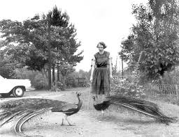 a road trip to flannery o connor s farm joe mctyre atlanta constitution flannery o connor in the driveway at andalusia