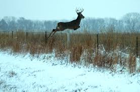 cool hunting backgrounds. Cool Whitetail Deer Wallpapers, #YRE-25 Hunting Backgrounds D