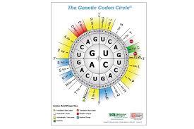 Codon Chart Circle 3dmd Genetic Codon Posters