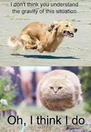 25 Funny Animal Memes To Make You Laugh Till You Drop via Relatably.com