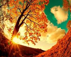 fall nature backgrounds. Beautiful Autumn Scene - Other \u0026 Nature Background Wallpapers On . Fall Backgrounds V