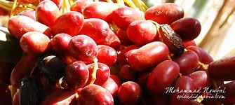 Date palm sugar calorie