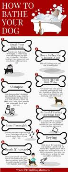 dog bathing tips tricks. how to bathe your dog in 8 steps (infographic) bathing tips tricks b