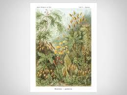 Kunstformen Der Natur Iii Art Prints Naturalis Unlimited
