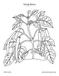 Vegetable garden coloring pages printable | food. Garden Vegetables Coloring Pages 10