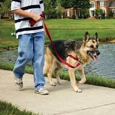 Easy Walk Harness No Pull Dog Harness