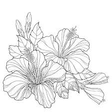 375 Stamens Hibiscus Stock Illustrations Cliparts And Royalty Free
