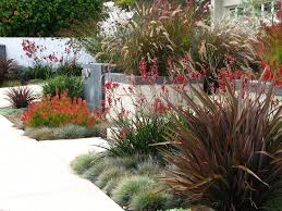 Small Picture kangaroo paw landscape traditional with front yard garden design