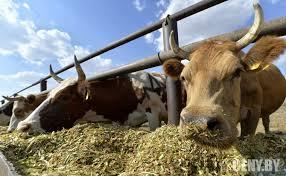 Курсовая Разработка рекомендаций по повышению экономической  Курсовая Разработка рекомендаций по повышению экономической эффективности производства и сбыта продукции животноводства в СПК Полыковичи Коммерчес