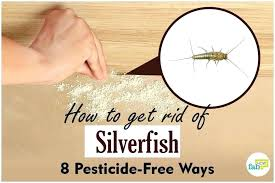 how to get rid of roaches in kitchen radioreneinfo how to get rid of roaches in