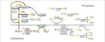 Simplified Overview Of Major Components Constituting Sulfur
