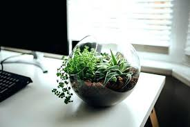 small office plant. Small Desk Plants For Office Plant