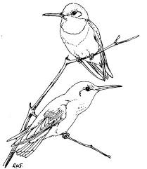 Small Picture Two Ruby Throated Hummingbirds coloring page Free Printable