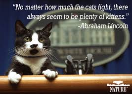 Why We Love Cats And Dogs Important Pet Quotes In History Nature