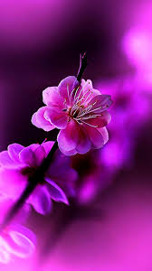beautiful wallpapers of flowers for mobile. On Beautiful Wallpapers Of Flowers For Mobile