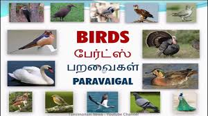 Birds Chart With Names In English Vocabulary About Birds With Pictures Including Tamil And English Pronunciation