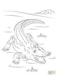 Dessin De Coloriage Crocodile Imprimer Cp08891