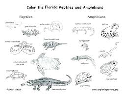 Coloring Pages Reptile Coloring Pages By Reptile Online Coloring Pages