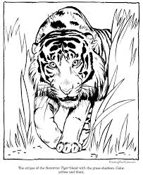 Small Picture Tiger coloring picture sheets