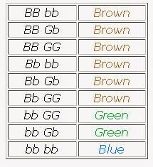 Mrs Kannadys Classes Eye Color Chart For Genotype Chart