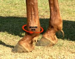 Bell Boot Size Chart Getting The Right Fit Iconoclast Equine