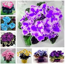 2019 exotic african violet seeds mixed colors flower seed saintpaulia ionantha garden bonsai plant pot perennial herb seeds from ymhzpy 1 52 dhgate